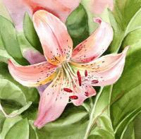 Flowers - Tiger Lily - Watercolor